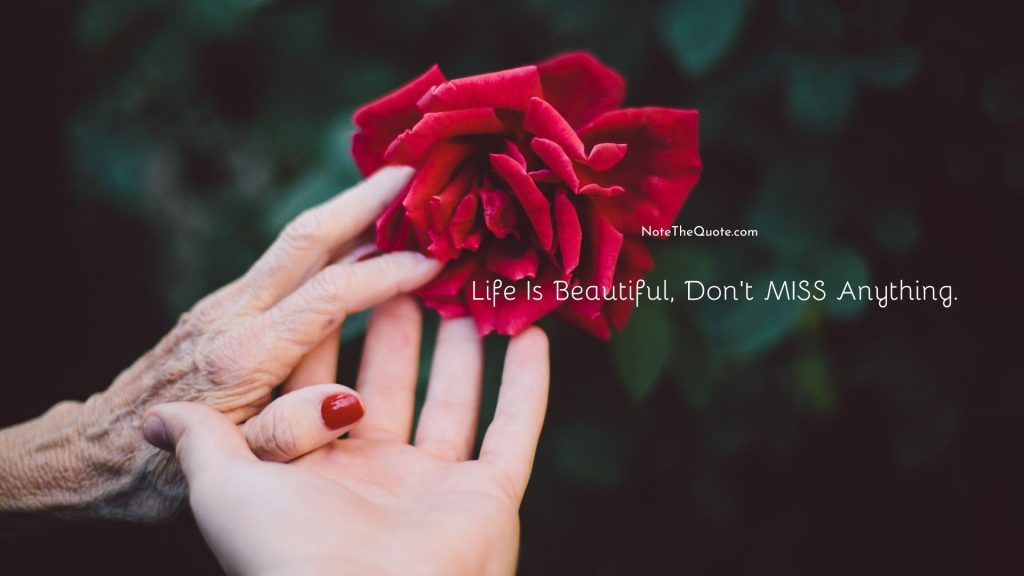 Life Is Beautiful, Don't MISS Anything