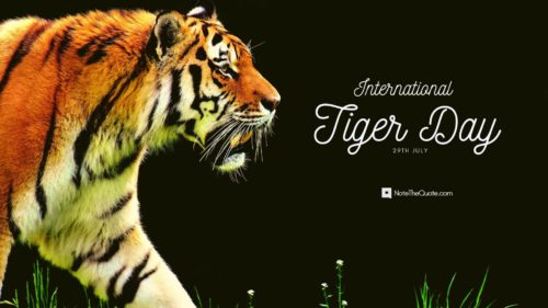 International-world Tiger Day -jungle--tiger--Quotes images-NoteTheQuote.com-