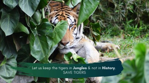 International-world Tiger Day -jungle-leaves-Quotes images-NoteTheQuote.com-